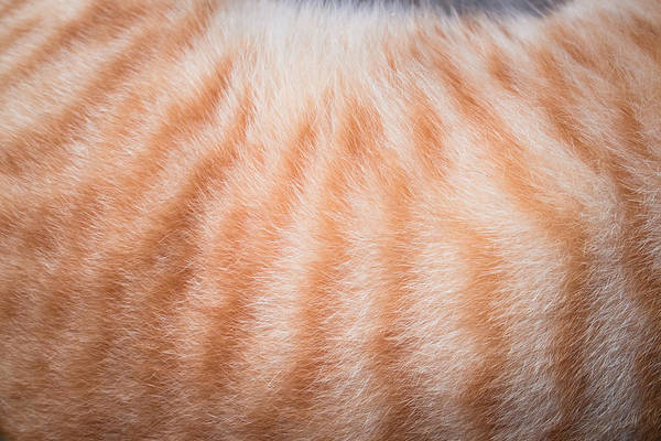Cropped Image Of Cat Hair Art Print by Ekachai Chobphot / EyeEm