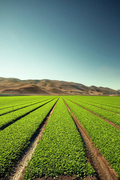 Environmental Issues Photograph - Crops Grow On Fertile Farm Land by Pgiam