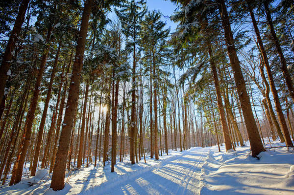 Cross Country Photograph - Cross-country Ski Trail In A Spruce by Jerry and Marcy Monkman