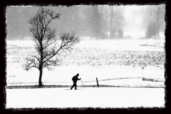 Photograph - Cross Country Skiier Canaan Valley by Dan Friend