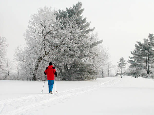 Photograph - Cross Country Skiing by Rob Huntley