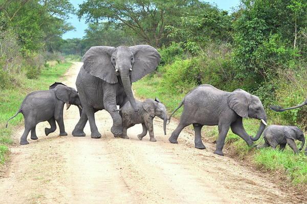 Safari Animal Photograph - Crossing Guard by Alexander Yates