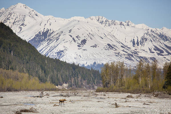 Wall Art - Photograph - Crossing The Chilkat River by Tim Grams