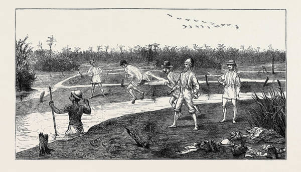 Trinidad Drawing - Crossing The Pitch Lake In The Island Of Trinidad by Caribbean School