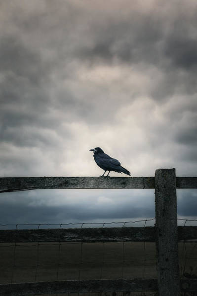 Rook Photograph - Crow by Joana Kruse