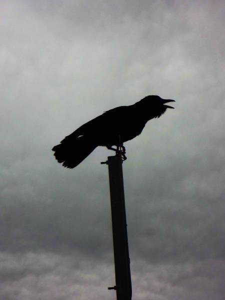 Photograph - Crow by Louis Maistros
