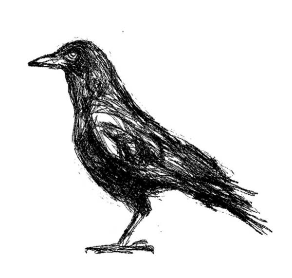 Drawing - Crow  by Paul Sutcliffe