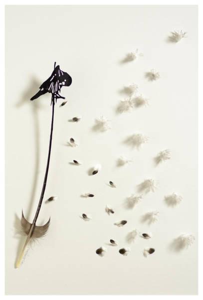 Wall Art - Mixed Media - Crow Preening by Chris Maynard