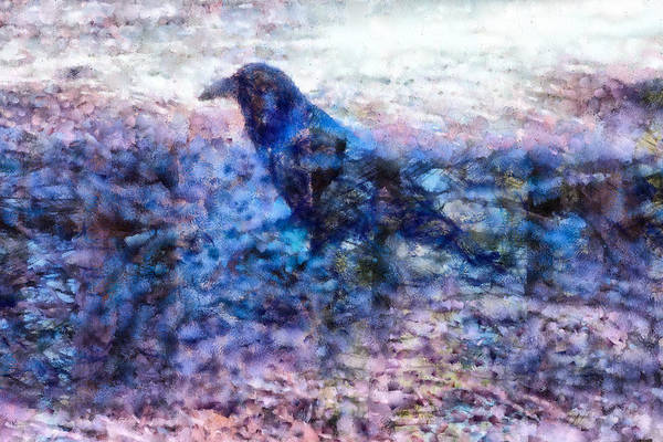Digital Art - Crow  by Priya Ghose