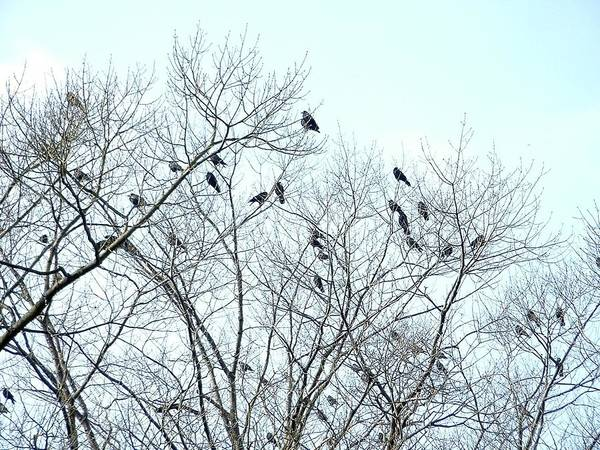 Photograph - Crow Trees by Marc Philippe Joly