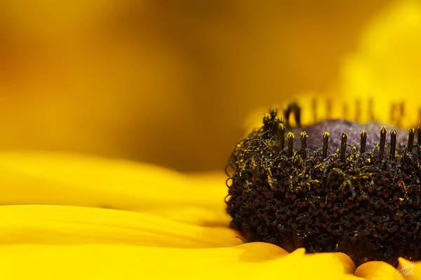 Interior Decorating Photograph - Crowning Sunshine by Lisa Knechtel