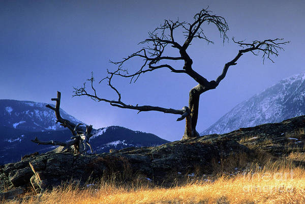 Crows Nest Wall Art - Photograph - Crow's Nest Pass Canada by Bob Christopher