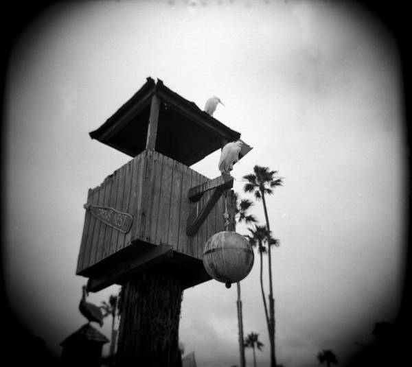 Crows Nest Wall Art - Photograph - Crows Nest by Paul Anderson