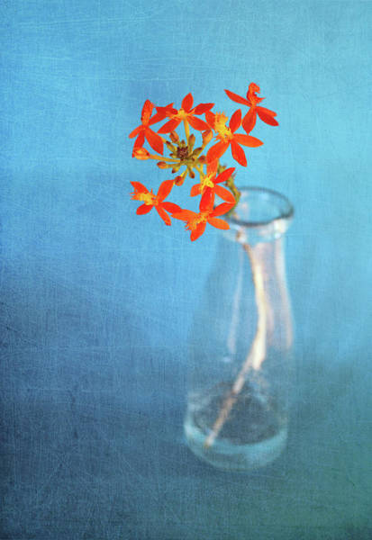Fragility Photograph - Crucifix Orchid by Linda Jones
