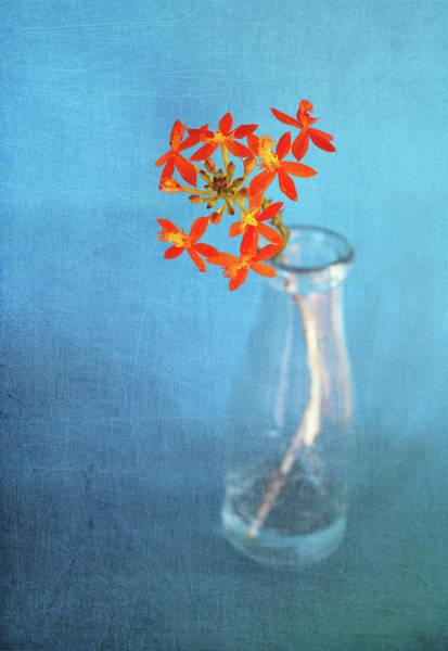 Jar Photograph - Crucifix Orchid by Linda Jones