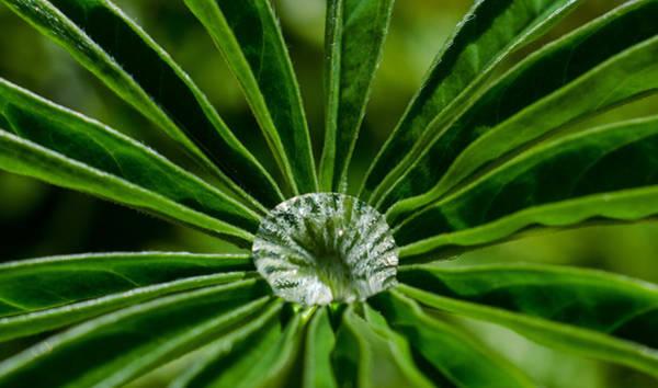 Photograph - Crystal Centerpiece by Jordan Blackstone