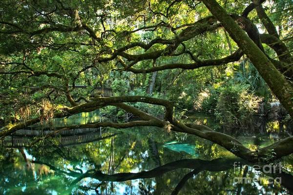 Photograph - Crystal Clear Fern Hammock Waters by Adam Jewell