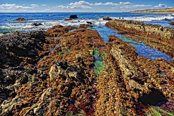 Crystal Cove Tide Pools  Art Print by Donna Pagakis
