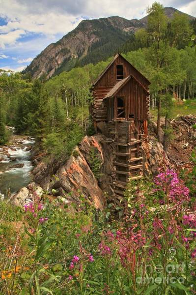 Photograph - Crystal Mill Wildflowers by Adam Jewell