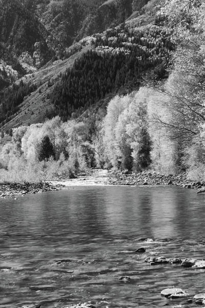 Photograph - Crystal River - Black And White by Harold Rau
