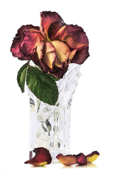 Crystal Rose Art Print