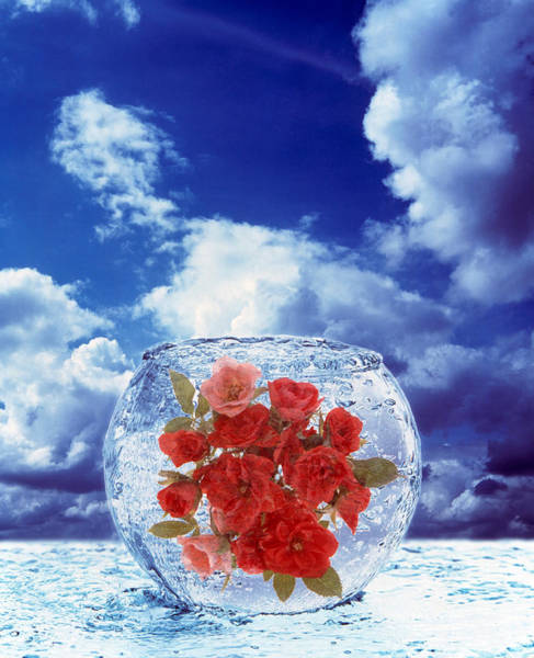 Rose Bowl Photograph - Crystal Round Vase Filled With Ice by Panoramic Images