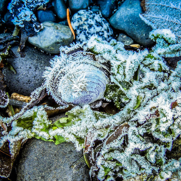 Photograph - Crystalline Clam by Roxy Hurtubise