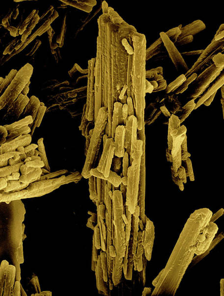 Wall Art - Photograph - Crystals Of Anhydrous Cholesterol by Science Photo Library.