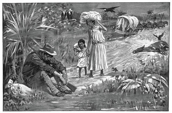 Drawing - Cuba Yellow Fever, 1898 by Granger