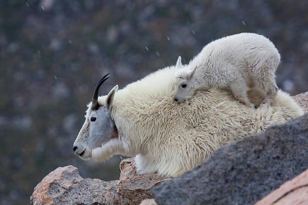 Photograph - Cuddle Up by Jim Garrison