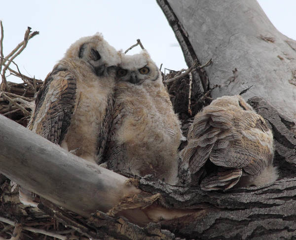 Photograph - Cuddling Up by Shane Bechler