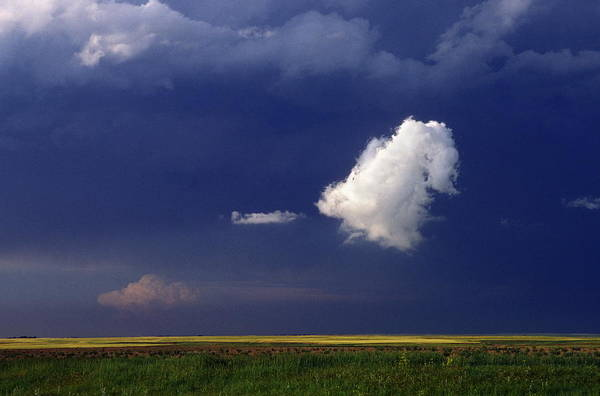 Grey Cloud Photograph - Cumulus Cloud by Jim Reed/science Photo Library