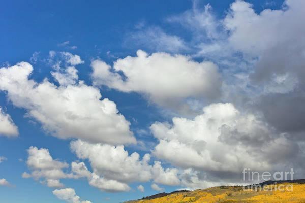 Photograph - Cumulus Clouds And Aspens by Yva Momatiuk John Eastcott