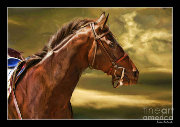 Photograph - Cuore Bella The Race Horse by Blake Richards