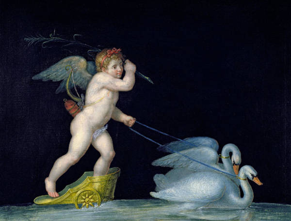 Chariot Wall Art - Painting - Cupid Being Led By A Pair Of Swans by Michelangelo Maestri