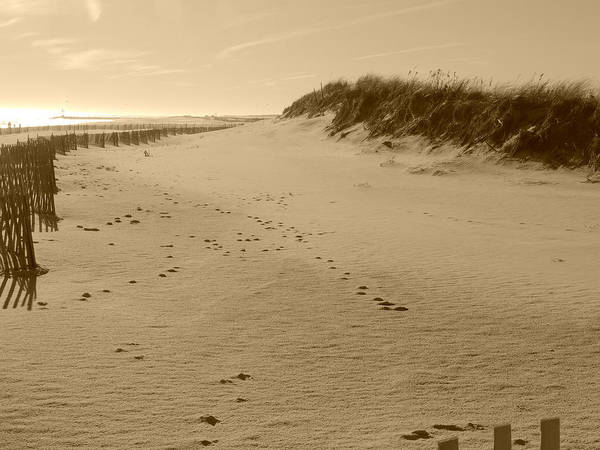 Photograph - Cupsogue Beach In Sepia by Kimberly Perry