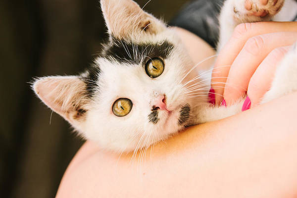 Wall Art - Photograph - Curious Kitten by Pati Photography