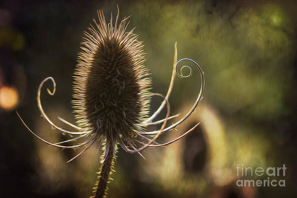 Photograph - Curly And Spiky. by Clare Bambers