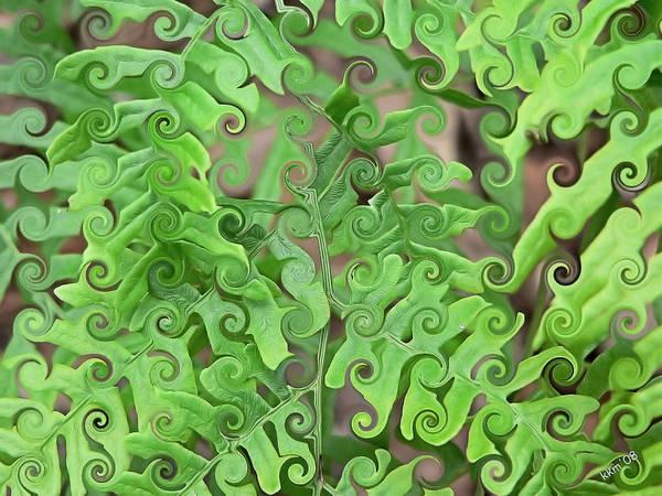 Digital Art - Curly Fronds by Kathy K McClellan