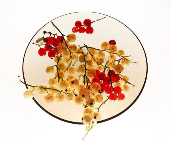 Green Berry Photograph - Currants On A Plate by Vitaliy Gladkiy