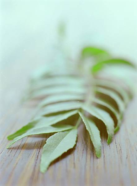 Cooking Photograph - Curry Leaves by Romulo Yanes