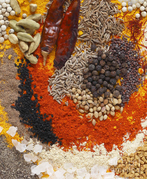 Photograph - Curry Spices Vertical by Paul Cowan