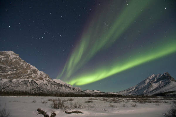 Boreal Forest Photograph - Curtains Of Green Aurora Borealis Fill by Hugh Rose