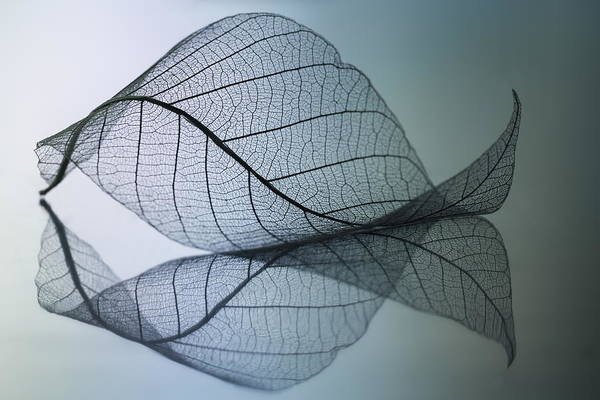 Transparent Wall Art - Photograph - Curvaceousness by Shihya Kowatari