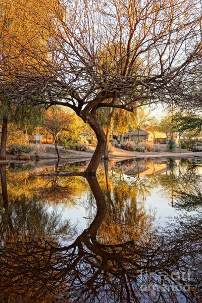 Photograph - Curved Reflection by Kerri Mortenson