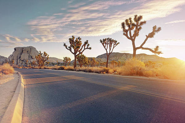 Yucca Brevifolia Photograph - Curved Road With Sunrise Flare by James O'neil