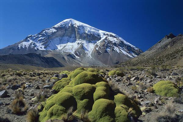 Dixon Photograph - Cushion Plant And Nevado Sajama Bolivia by Grant  Dixon