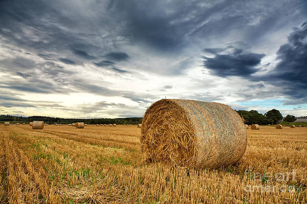 Bales Photograph - Cut Field by Jane Rix