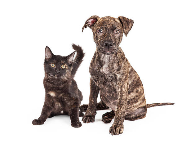 Canine Photograph - Cute Brindle Puppy And Kitten by Susan Schmitz