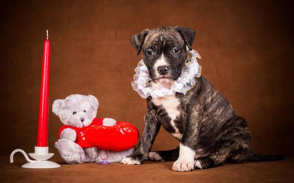 Photograph - Cute Christmas Dog by Doc Braham